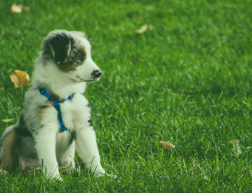 Beyond the Breed: A Glimpse of Canine Genetics