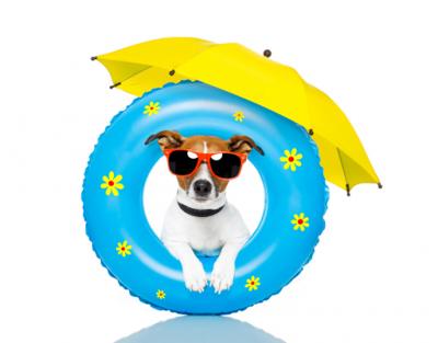 dog with umbrella and innertube