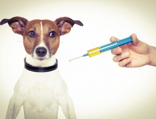 Heartworm Prevention for Herding Dogs