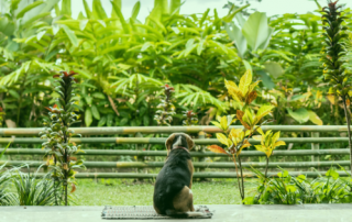 poisonous plants and pets
