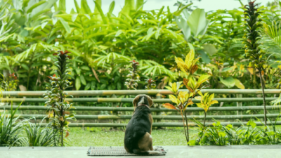 Poisonous Plants and Pets – Pet Health Pharmacy on safe dogs, safe art, safe design, safe furniture, safe cooking, safe plants for cats household,