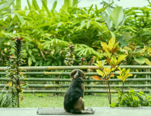 Poisonous Plants and Pets
