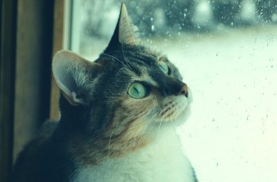 cooped up cat looks out window at rain