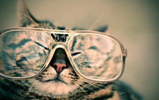 eye disease in cats