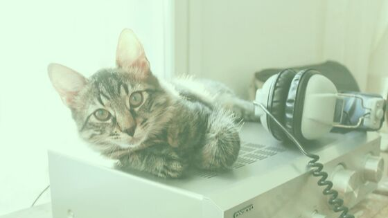 Technology and Pets