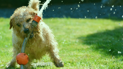 helping your dog beat the heat