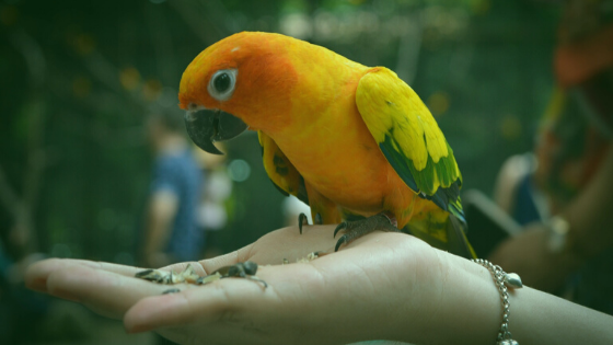 Exotic Pets: Concerns and Considerations